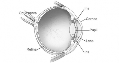 optic-nerve-damage-diseases-and-eye-conditions